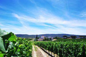 Wine tour portugal