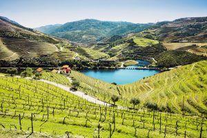 wine tour portugal porto douro