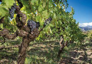 wine tour puglia italy