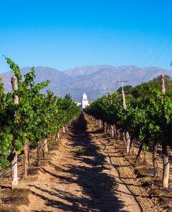 wine tour argentina