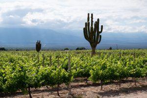 wine tour argentina bolivia