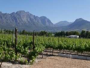 Wine tour South Africa