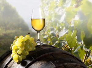 wine tour slovenia jerusalem
