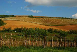 wine tour romania iasi bucarest