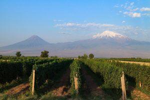 wine tour armenia georgia ararat