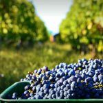 14-day Wine tour Uruguay including 3 days city trip Buenos Aires, Argentina