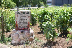 wine tour Croatia serbia bulgaria