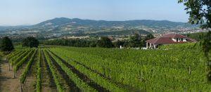 wine tour Croatia Bosnia