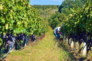 wine tour bulgaria greece macedonia