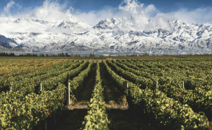 wine tour argentina chile andes