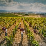 7-day wine tour Sardinia, Italy