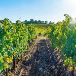 8-day wine tour Umbria, Italy